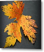 Leaf Portrait Metal Print