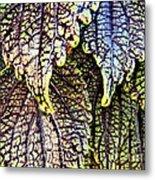 Leaf Series 15 Metal Print
