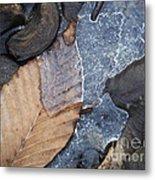 Leaf Series 42 Metal Print