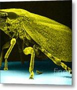 Leafhopper, Sem Metal Print