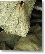 Leafpile 2 Metal Print