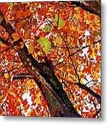 Leafward Metal Print