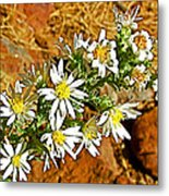Leafy-bract Asters In Wildcat Canyon Trail Along Kolob Terrace Road In Zion National Park-utah Metal Print