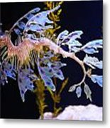 Leafy Sea Dragon - Seahorse Metal Print