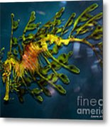 Leafy Sea Dragon Metal Print by Artist and Photographer Laura Wrede