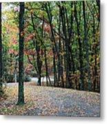 Leafy Trail Metal Print