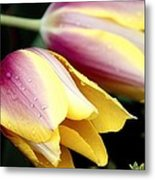 Leaning From The Dew Metal Print