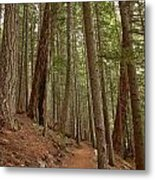 Leaning Over The Trail Metal Print