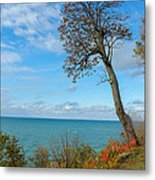 Leaning Tree Over Lake Metal Print