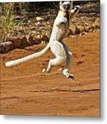 Leaping Lemur Metal Print