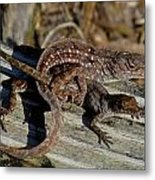 Leaping Lizards Metal Print