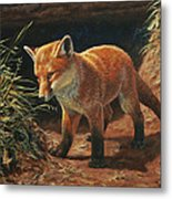 Red Fox Pup - Learning Metal Print