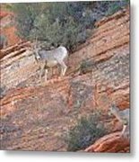 Learning How To Rock Climb Zion Metal Print