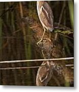 Least Bittern Pictures 17 Metal Print