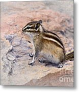 Least Chipmunk #2 Metal Print