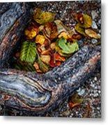 Leaves And Root Metal Print
