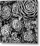 Leaves And Succulents Metal Print