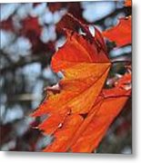 Leaves Backlit 3 Metal Print