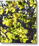 Leaves Blowing Metal Print