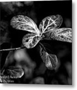 Leaves - Bw Metal Print