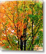 Leaves Changing Colors Metal Print