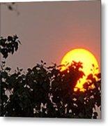 Leaves Cradling Setting Sun Metal Print