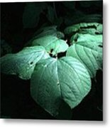 Leaves In A Patch Of Sunlight Metal Print