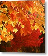 Fall Leaves In Afternoon Sun Metal Print