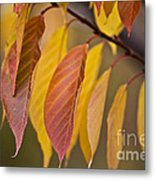 Leaves In Fall Metal Print