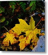 Leaves In Still Shallows Metal Print