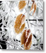 Leaves In The Frost Metal Print