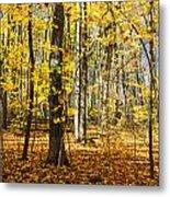 Leaves In The Woods Metal Print