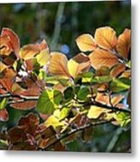 Leaves Of Light Metal Print by Tim Rice