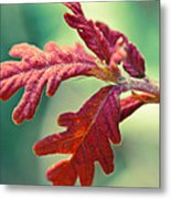 Leaves Of Red Metal Print
