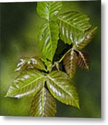 Leaves Of Three Metal Print