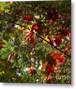 Leaves On Evergreen Metal Print