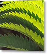 Leaves Patterns Metal Print