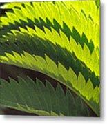 Leaves Patterns Metal Print by Eva Kato