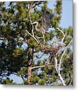 Leaving The Nest Metal Print