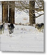 Legends Of The Lamar Valley Metal Print