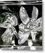 Lemon Blossoms Metal Print