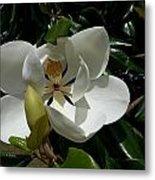 Lemon Magnolia Metal Print