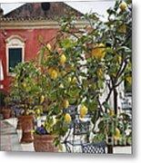 Lemon Trees On A Villa Terrace Metal Print by George Oze