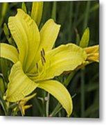 Lemon Yellow Daylily Blossom Metal Print