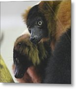 Lemur - National Zoo - 01131 Metal Print