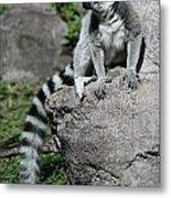 Lemur Pose Metal Print