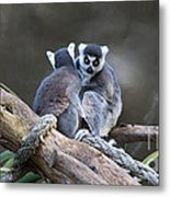 Lemur's Metal Print by Shannon Rogers