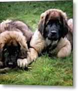 Leonberger Puppies Metal Print