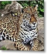 Leopard At Rest Metal Print