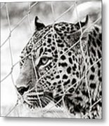 Leopard Black And White Photography Metal Print